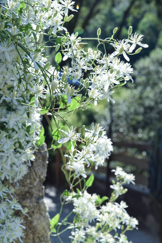 moonrise les jolis fleurs
